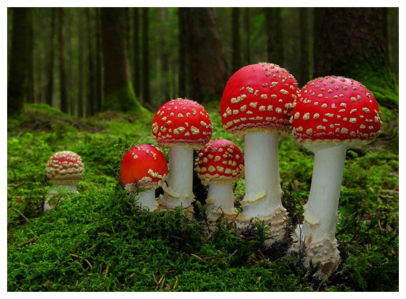 Mushroom Plants Manufacturer & Supplier In India